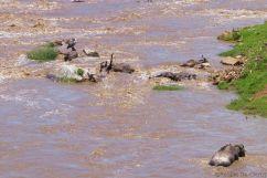 Masai Mara National Reserve (140)