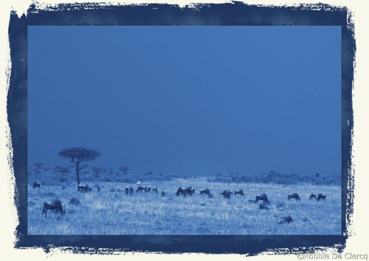 Masai Mara National Reserve (141)