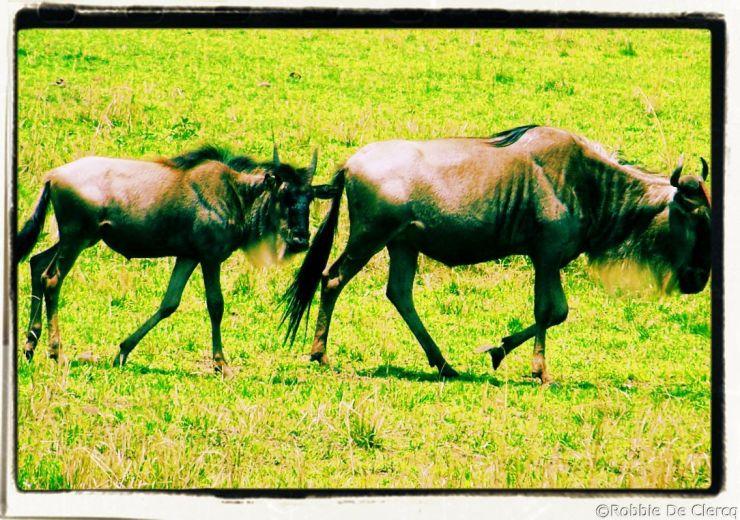 Masai Mara National Reserve (144)
