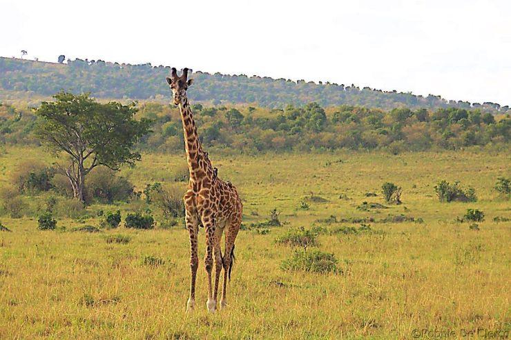 Masai Mara National Reserve (15)