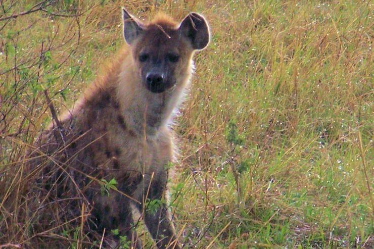 Masai Mara National Reserve (150)