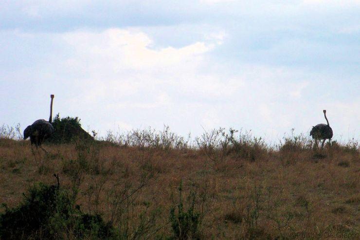 Masai Mara National Reserve (151)