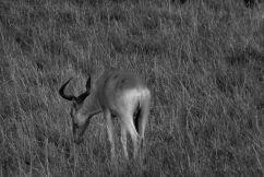 Masai Mara National Reserve (154)