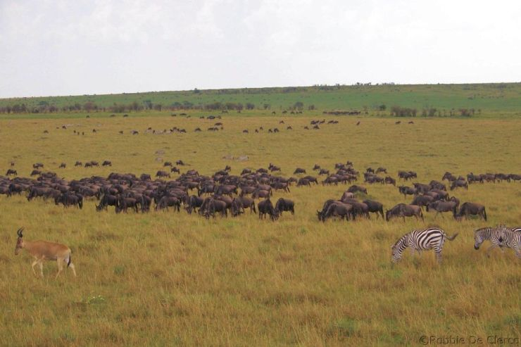 Masai Mara National Reserve (155)