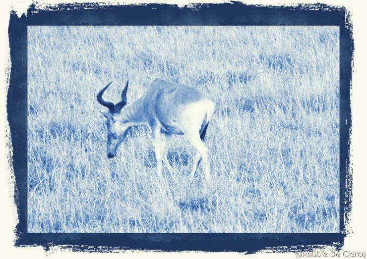 Masai Mara National Reserve (157)