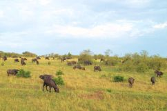 Masai Mara National Reserve (16)