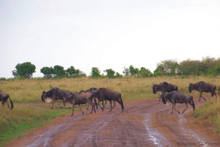 Masai Mara National Reserve (160)