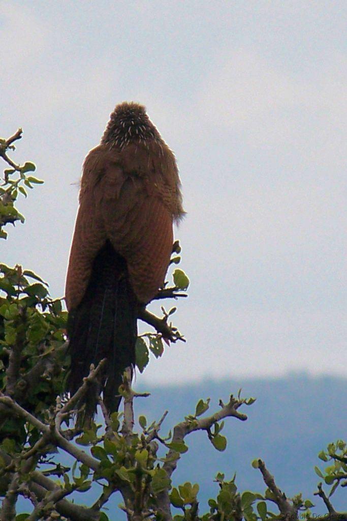 Masai Mara National Reserve (163)