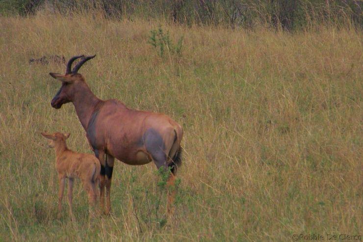 Masai Mara National Reserve (166)