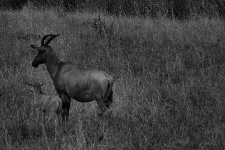 Masai Mara National Reserve (167)