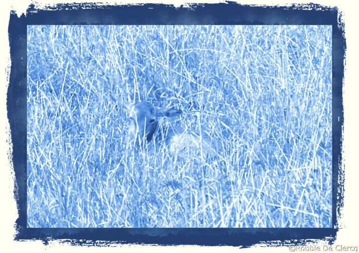 Masai Mara National Reserve (169)