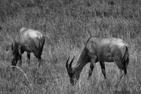 Masai Mara National Reserve (171)