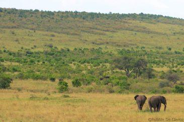 Masai Mara National Reserve (177)