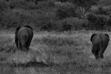 Masai Mara National Reserve (178)