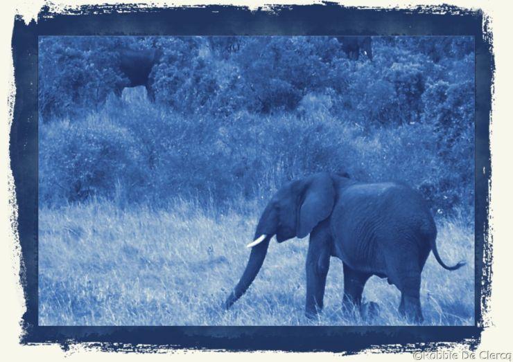 Masai Mara National Reserve (179)