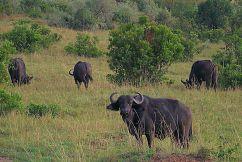 Masai Mara National Reserve (18)