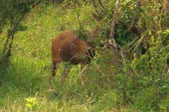 Masai Mara National Reserve (182)