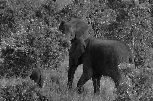 Masai Mara National Reserve (184)