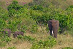 Masai Mara National Reserve (187)