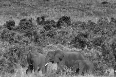Masai Mara National Reserve (189)