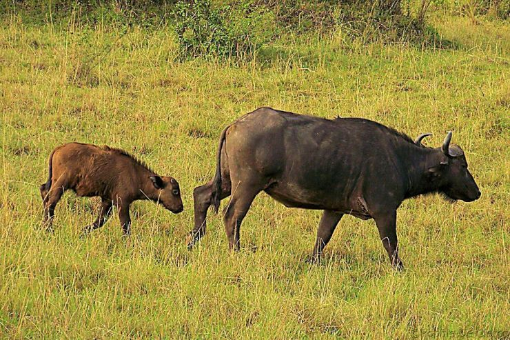 Masai Mara National Reserve (19)
