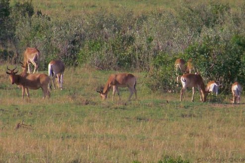 Masai Mara National Reserve (191)