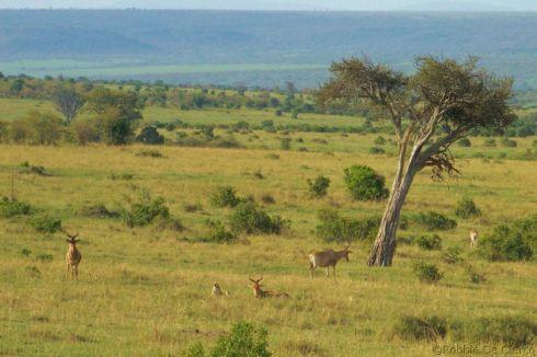 Masai Mara National Reserve (192)