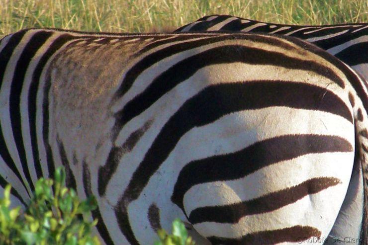 Masai Mara National Reserve (194)