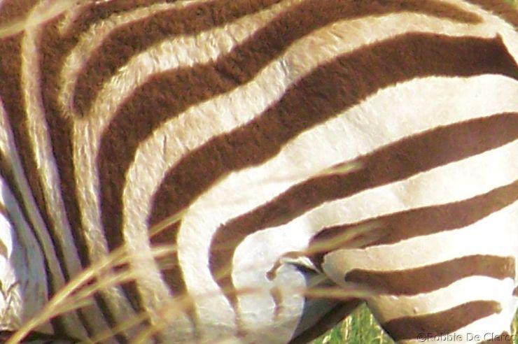 Masai Mara National Reserve (195)
