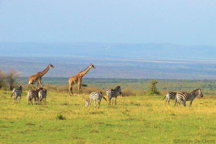 Masai Mara National Reserve (196)