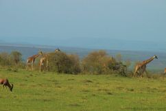 Masai Mara National Reserve (197)