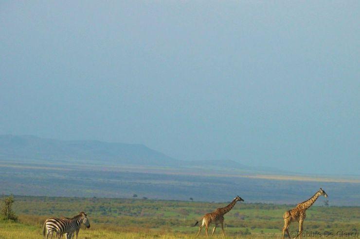 Masai Mara National Reserve (198)