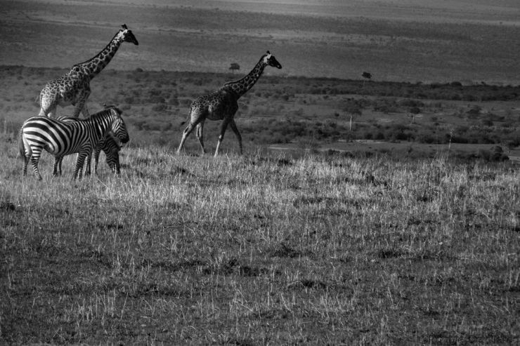 Masai Mara National Reserve (199)