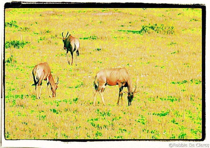 Masai Mara National Reserve (2)