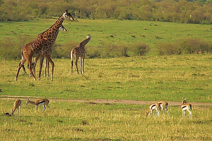 Masai Mara National Reserve (200)