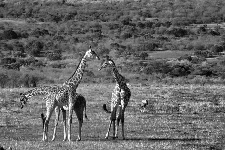 Masai Mara National Reserve (201)