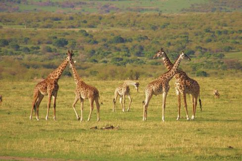 Masai Mara National Reserve (202)