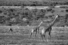 Masai Mara National Reserve (205)