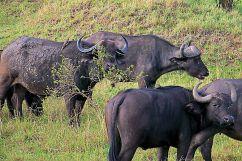 Masai Mara National Reserve (21)