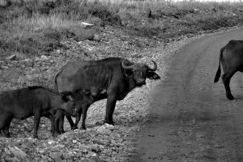 Masai Mara National Reserve (26)