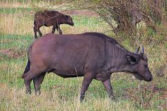 Masai Mara National Reserve (27)