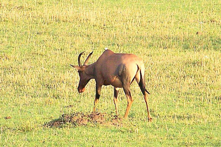 Masai Mara National Reserve (3)