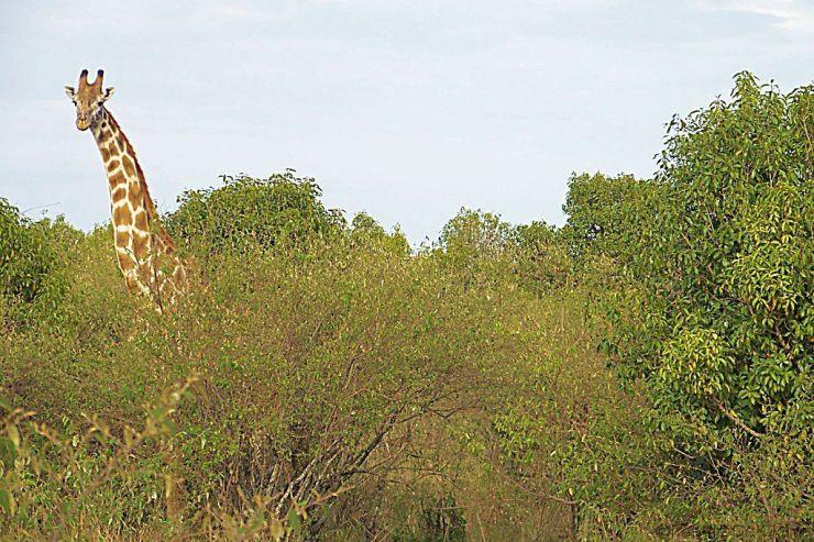 Masai Mara National Reserve (31)