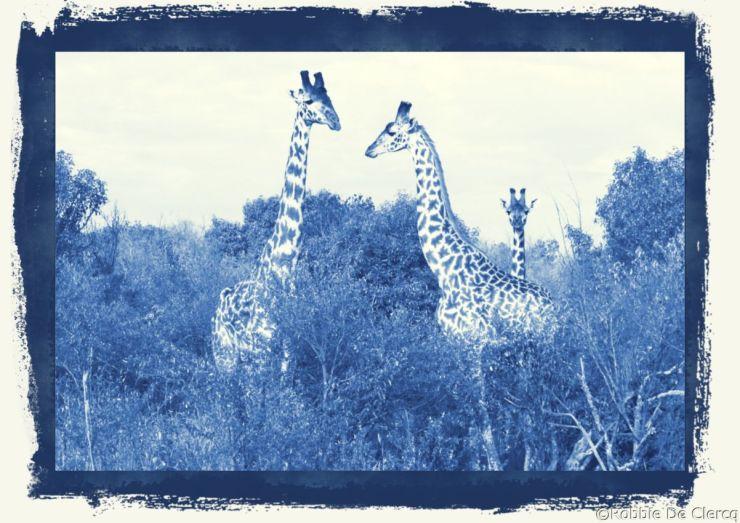Masai Mara National Reserve (33)