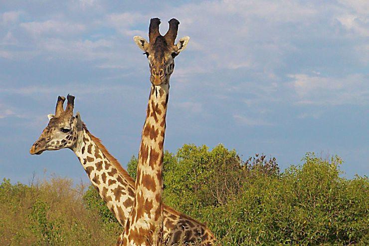 Masai Mara National Reserve (34)