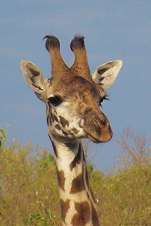 Masai Mara National Reserve (35)