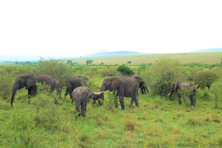 Masai Mara National Reserve (38)