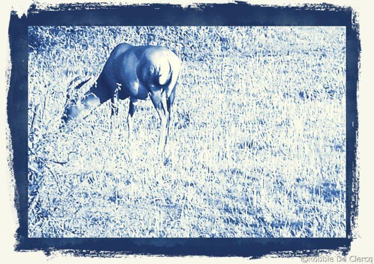 Masai Mara National Reserve (4)