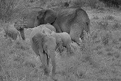 Masai Mara National Reserve (40)