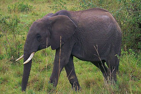 Masai Mara National Reserve (41)